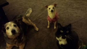 Workers Compensation Pets
